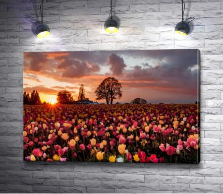 Закат над полем тюльпанов