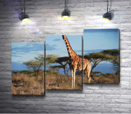 Жираф выше деревьев