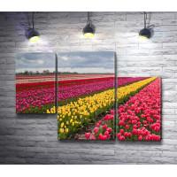 Поле из красочных тюльпанов