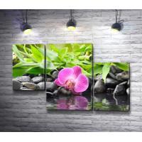 Орхидея у воды на камнях