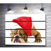Бульдог в новогодней шапочке