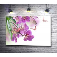 Бабочки на орхидеях