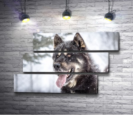 Волк и снегопад