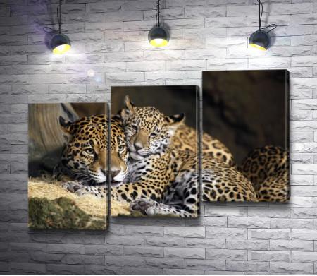 Мать и ребенок ягуара