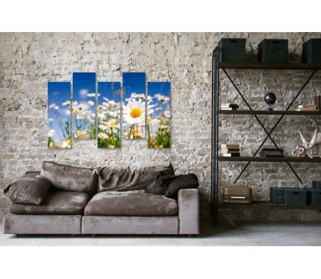Ромашки и голубое небо