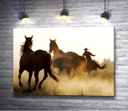 Ковбой и лошади