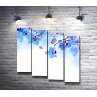 Нежно-голубые орхидеи