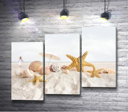 Морские ракушки на песке