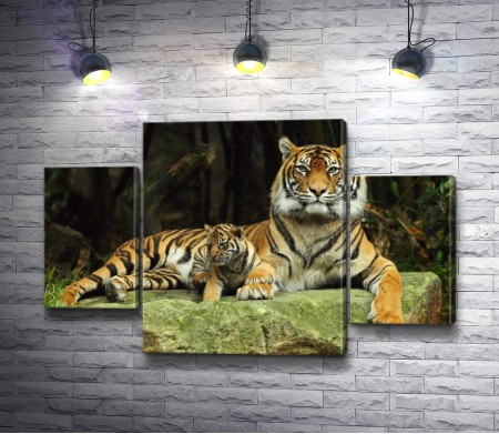 Тигр с тигренком