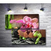 Лиловая орхидея и камни спа
