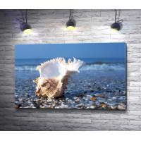 Морская ракушка на летнем пляже