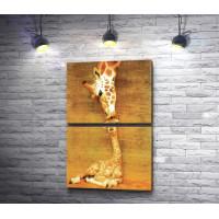 Поцелуй мамы жирафа