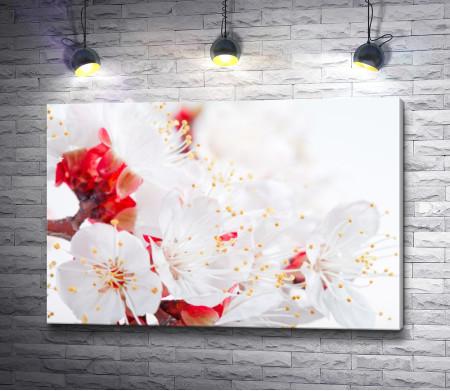 Нежность цветущей вишни