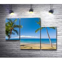 Пальмы на гавайском побережье