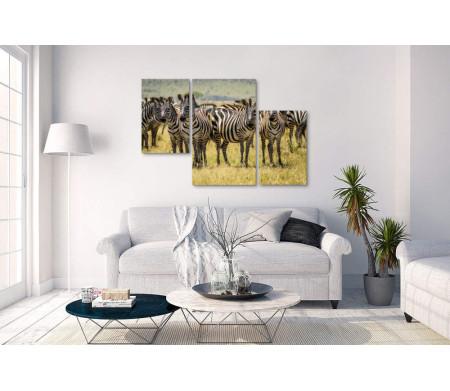 Зебры в саванне