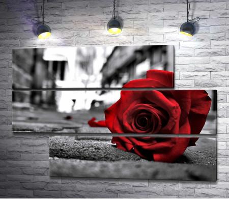Алая роза на сером асфальте