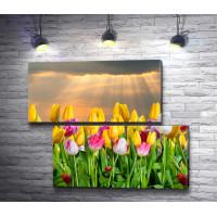 Весенние тюльпаны и рассвет