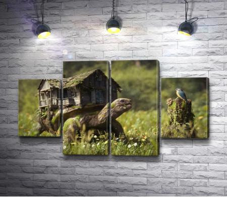 Домик черепахи