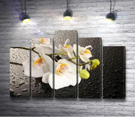 Белые орхидеи на фоне с капельками