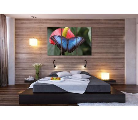 Голубая бабочка на красной кале