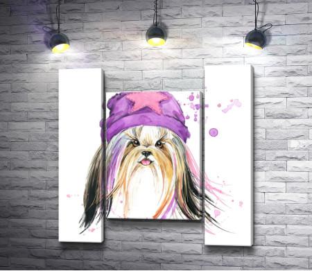 Забавная собака-модница