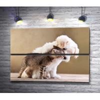 Котенок и щенок