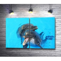 Пара дельфинов в бассейне