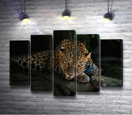 Леопард лежит на камне