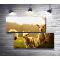 Маленькие овечки гуляют с мамой на лугу