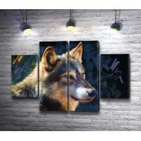 Нарисованный волк