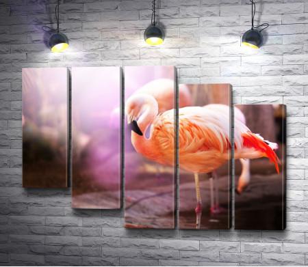 Розовый фламинго на природе