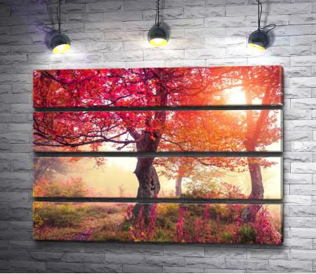 Краски природы осенью