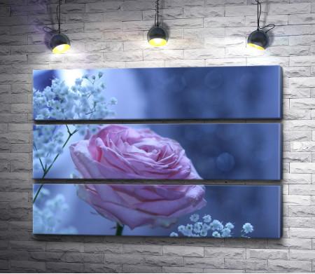 Розовая роза в голубом свете