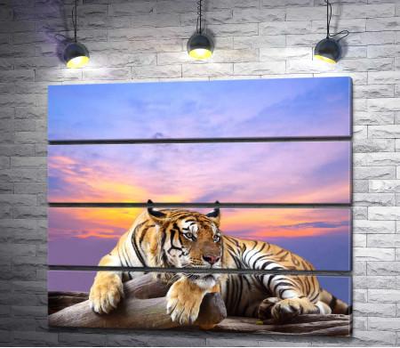 Тигр лежит на дереве на фоне сиреневого неба