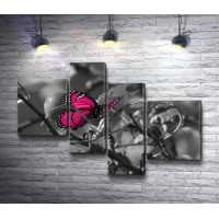 Розовая бабочка на фото в черно-белой гамме
