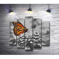 Оранжевая бабочка на хризантеме в черно-белых тонах
