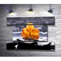 Желтая орхидея на спа камнях, фото в черно-белой гамме