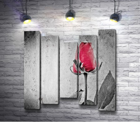 Красный бутон розы среди черно-белой гаммы