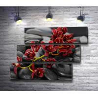 Красная орхидея на спа-камнях
