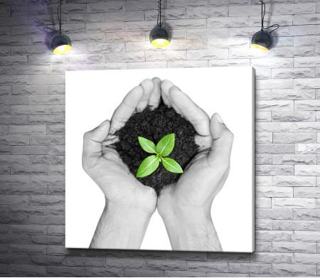 Зеленый росток в ладошках, черно-белое фото