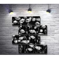 Россыпь красивых роз, черно-белое фото