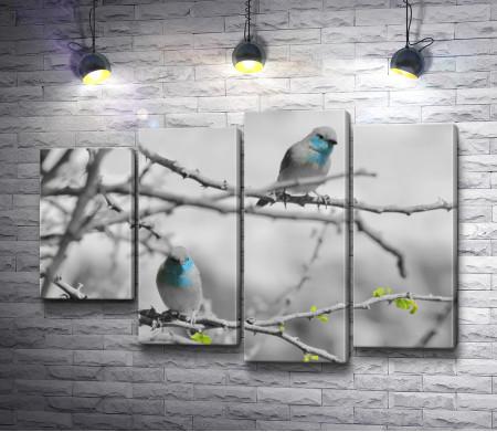 Снегири на дереве, черно-белое фото