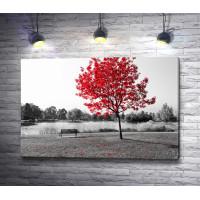 Осеннее дерево в цвете на черно-белом фото