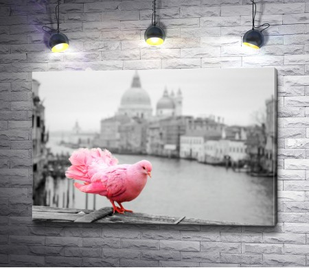 Розовый голубь на фоне Гранд-канала, Венеция