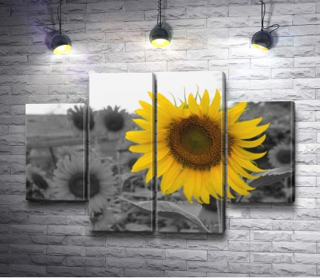 Желтый подсолнух на фоне черно-белых