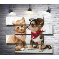 Котенок вместе с щенком