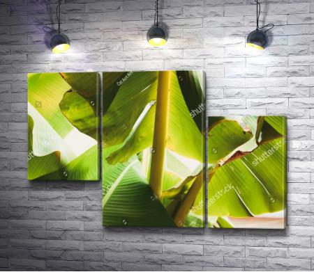 Под зелеными листочками