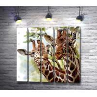 Добрые жирафы