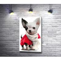 Маленькая собачка в большом шарфике
