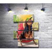 Собачка сидит в кепке и на стуле